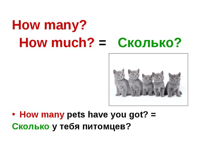 How many? How much? = Сколько? How many pets have you got? = Сколько у тебя п...