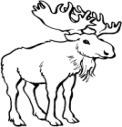 C:\Documents and Settings\User\Рабочий стол\1\moose.jpg