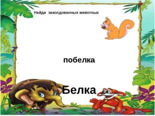 Найди заколдованных животных побелка Белка