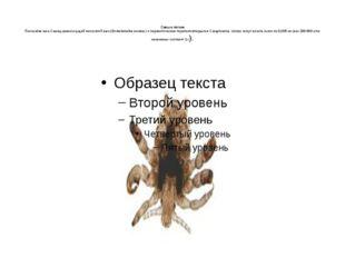 Самые легкие Полосатая вша Самец кровососущей полосатой вши (Enderleinellusz