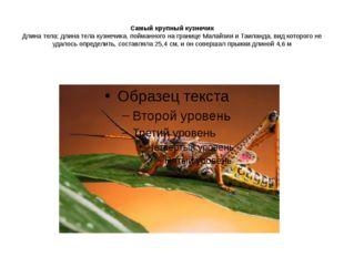 Самый крупный кузнечик Длина тела: длина тела кузнечика, пойманного на грани