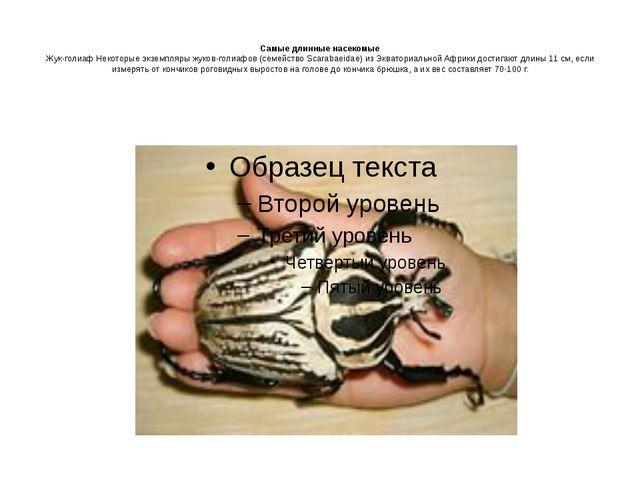 Самые длинные насекомые Жук-голиаф Некоторые экземпляры жуков-голиафов (семе...