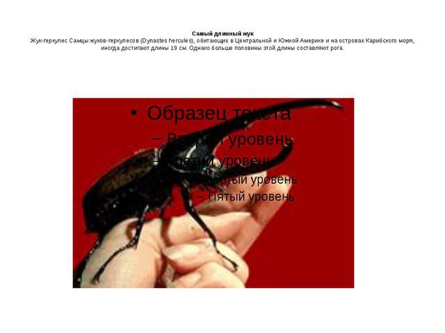 Самый длинный жук Жук-геркулес Самцы жуков-геркулесов (Dynastes hercules), о...