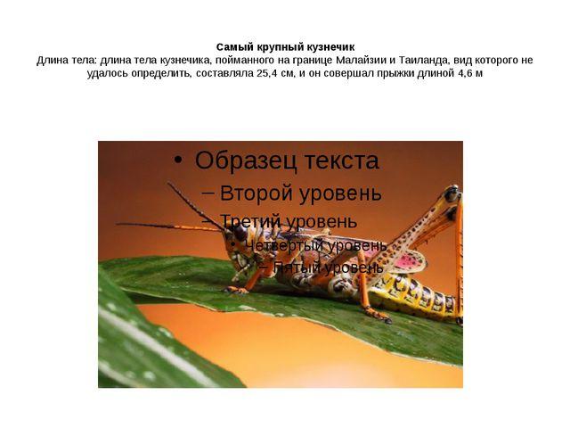 Самый крупный кузнечик Длина тела: длина тела кузнечика, пойманного на грани...