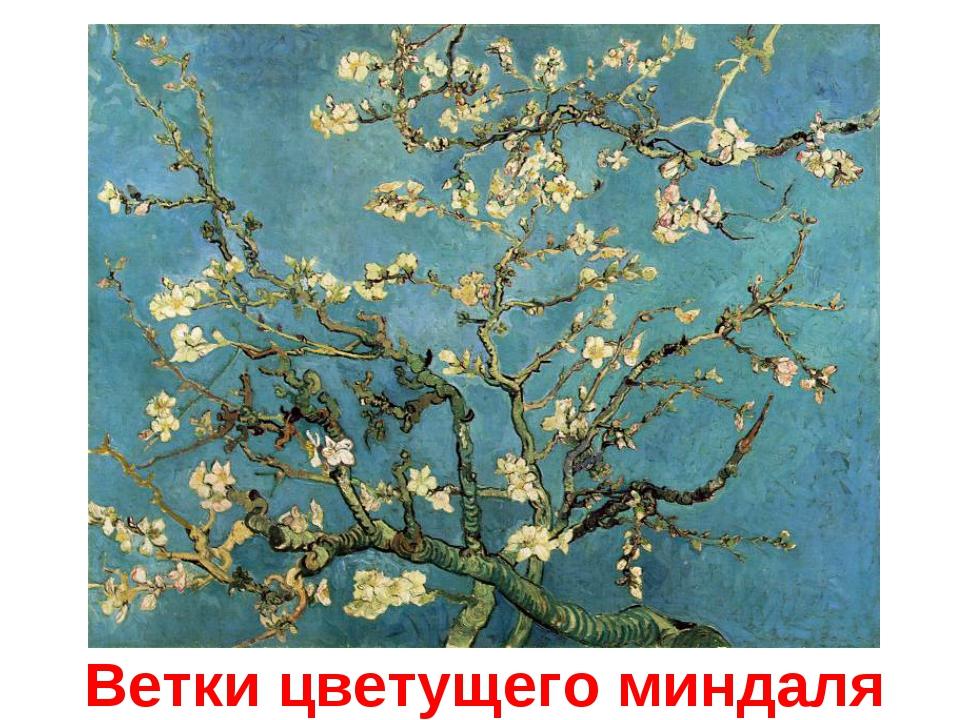 Ветки цветущего миндаля