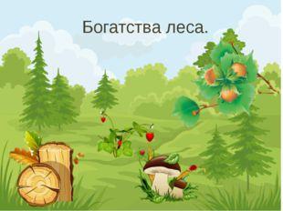 Богатства леса.