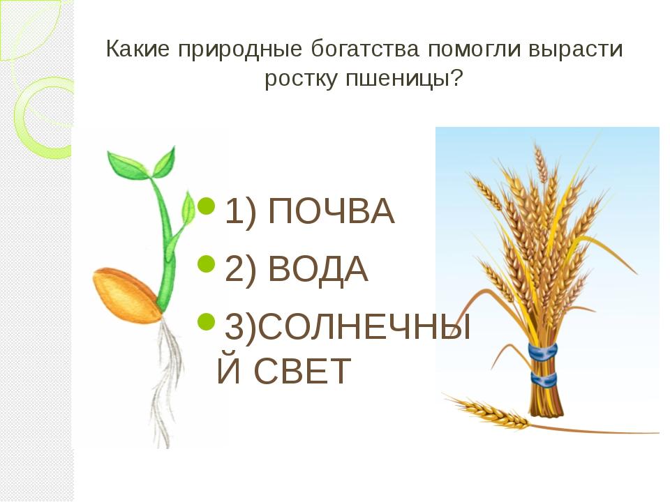Какие природные богатства помогли вырасти ростку пшеницы? 1) ПОЧВА 2) ВОДА 3)...