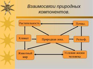 Взаимосвязи природных компонентов. Природная зона. Почвы. Рельеф. Условия жиз