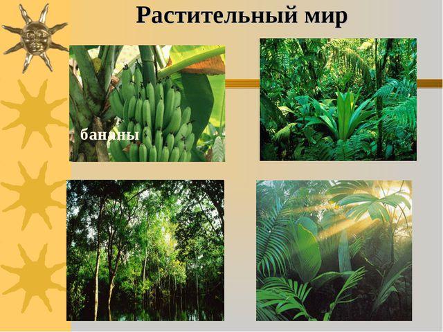 Растительный мир бананы