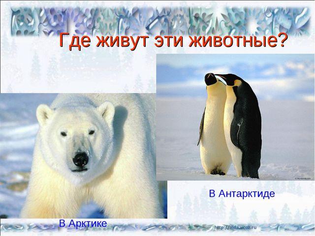 Где живут эти животные? В Арктике В Антарктиде