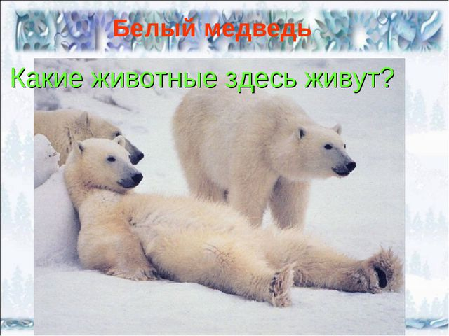 Белый медведь Какие животные здесь живут?