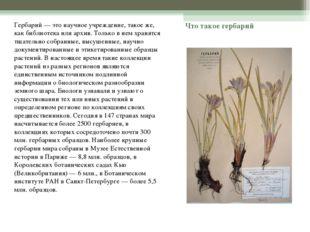 Что такое гербарий Гербарий — это научное учреждение, такое же, как библиотек