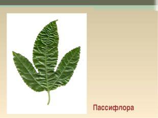 Пассифлора