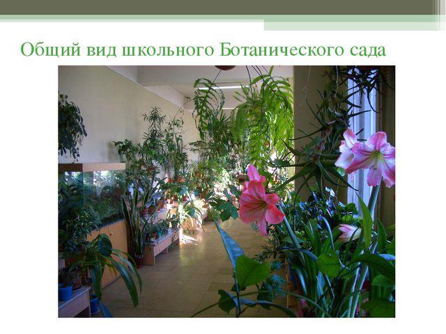 Общий вид школьного Ботанического сада