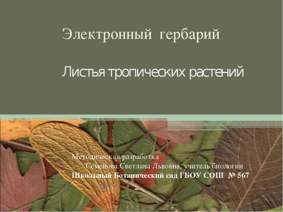 Электронный гербарий Листья тропических растений Методическая разработка Сем...