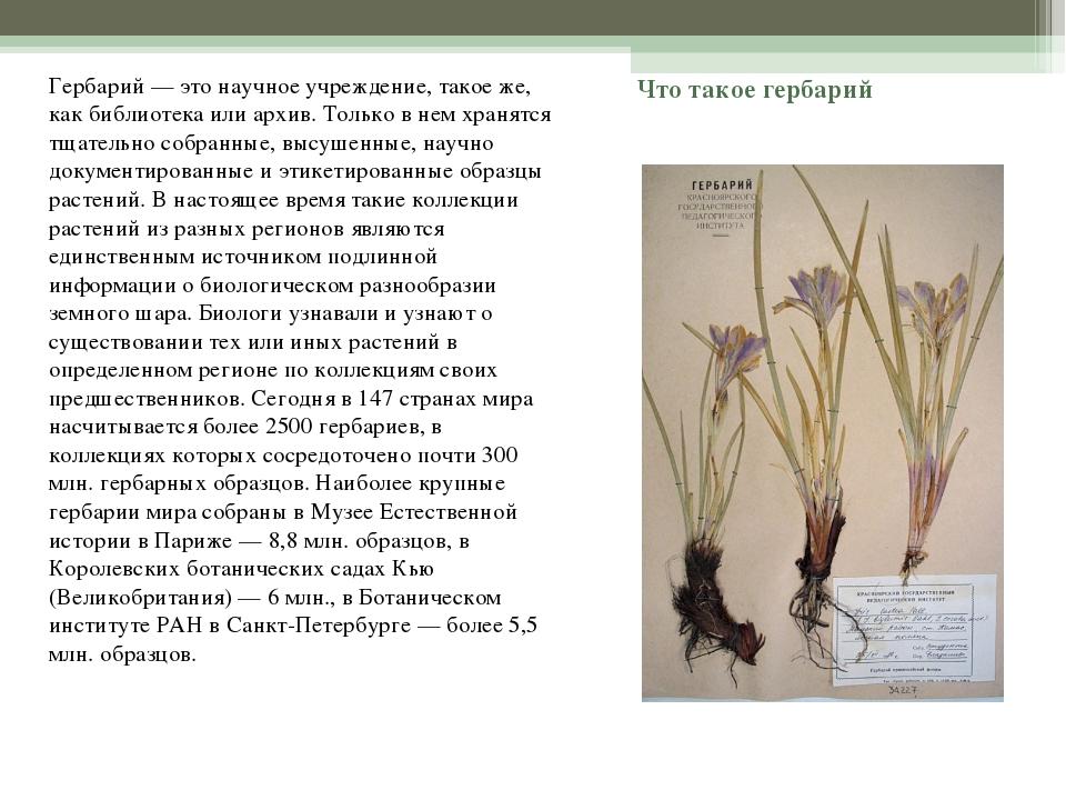 Что такое гербарий Гербарий — это научное учреждение, такое же, как библиотек...