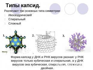 C:\Users\USER\Desktop\Аттестация С.А\Биология\img9.jpg