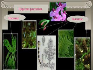 Низшие Высшие Царство растения