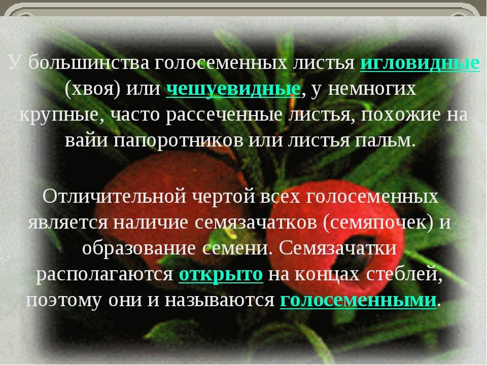 У большинства голосеменных листья игловидные (хвоя) или чешуевидные, у немног...