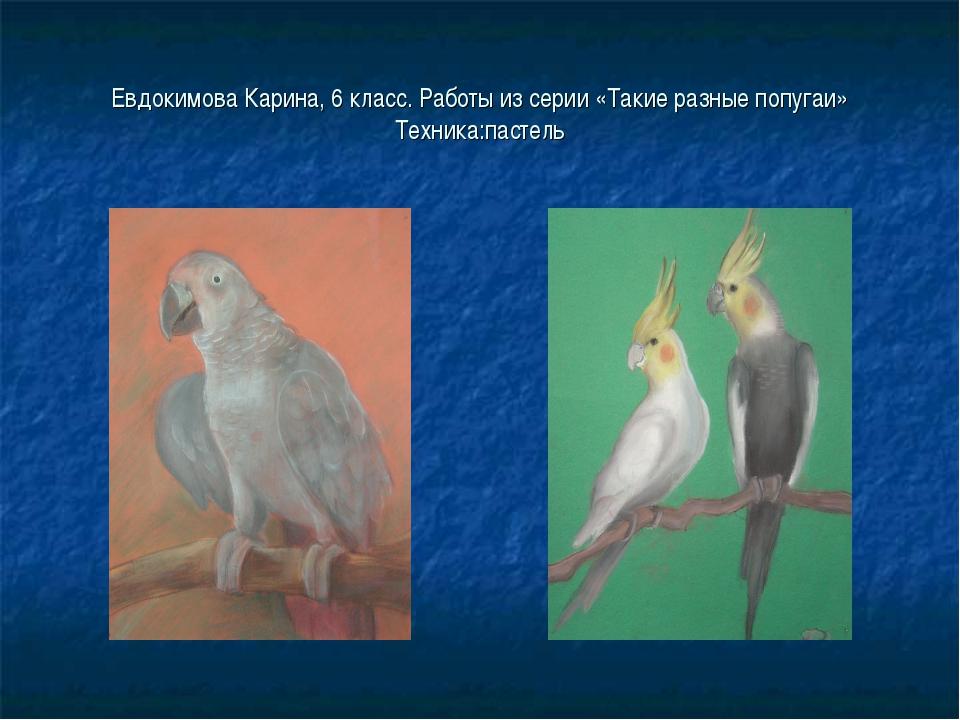 Евдокимова Карина, 6 класс. Работы из серии «Такие разные попугаи» Техника:па...