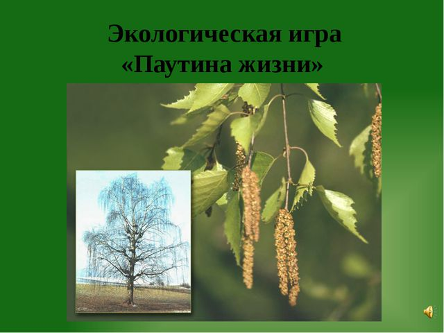 Экологическая игра  «Паутина жизни»