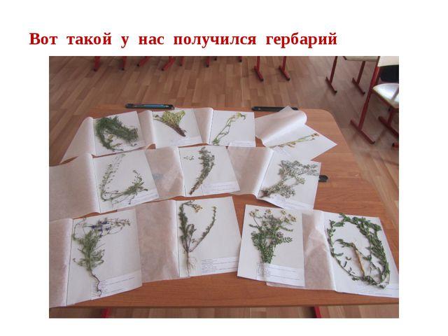 Вот такой у нас получился гербарий