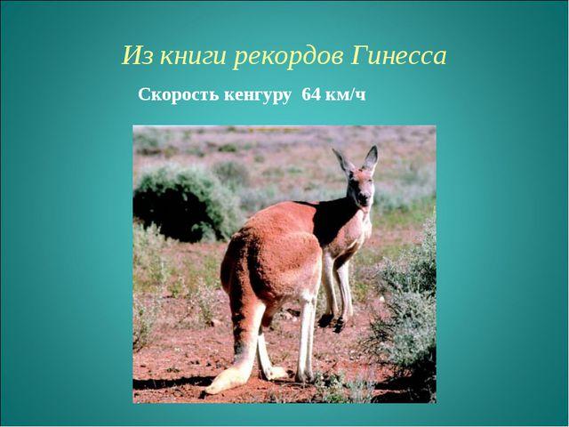 Из книги рекордов Гинесcа Скорость кенгуру 64 км/ч