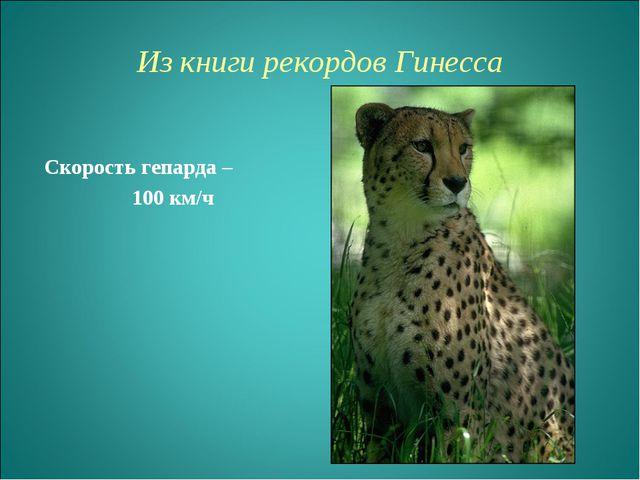 Из книги рекордов Гинесcа Скорость гепарда – 100 км/ч