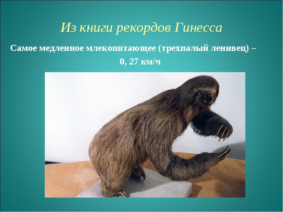 Из книги рекордов Гинесcа Самое медленное млекопитающее (трехпалый ленивец) –...
