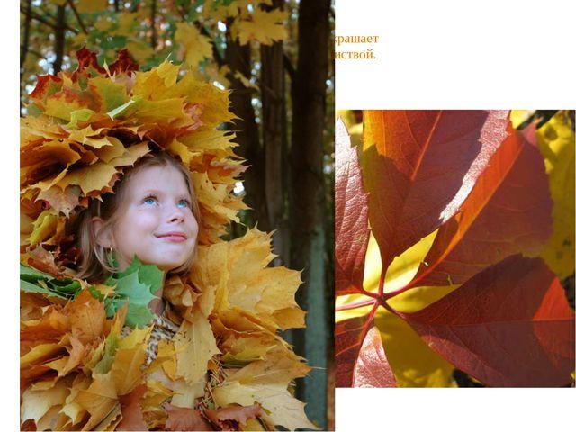 Осень скверы украшает Разноцветною листвой.