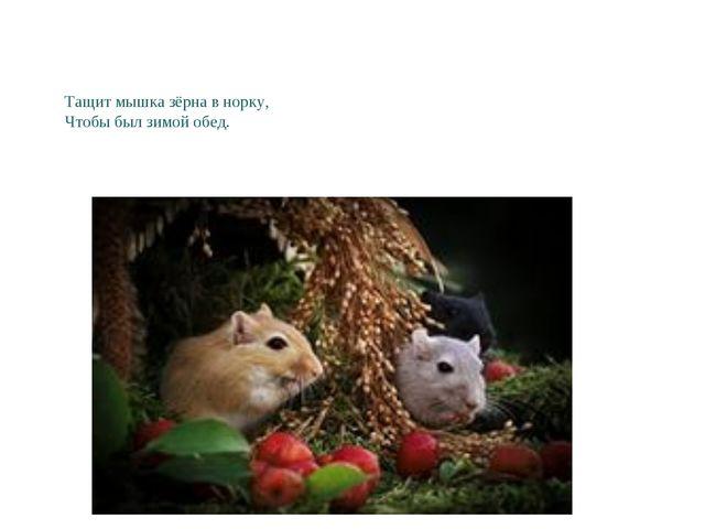 Тащит мышка зёрна в норку, Чтобы был зимой обед.