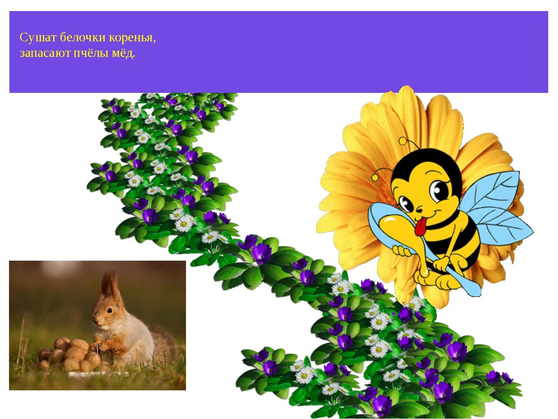 Сушат белочки коренья, запасают пчёлы мёд.