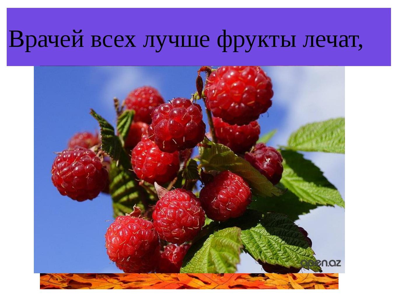 Врачей всех лучше фрукты лечат,