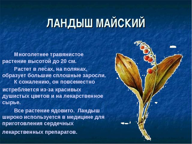 ЛАНДЫШ МАЙСКИЙ Многолетнее травянистое растение высотой до 20 см. Расте...