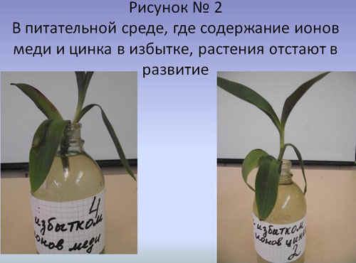 http://festival.1september.ru/articles/589917/2.JPG