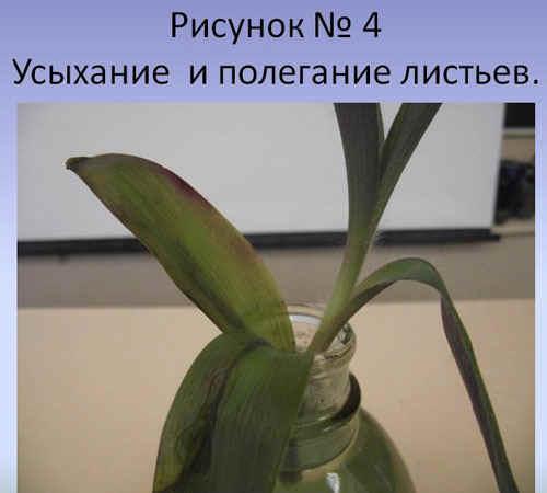 http://festival.1september.ru/articles/589917/4.JPG