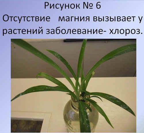 http://festival.1september.ru/articles/589917/6.JPG