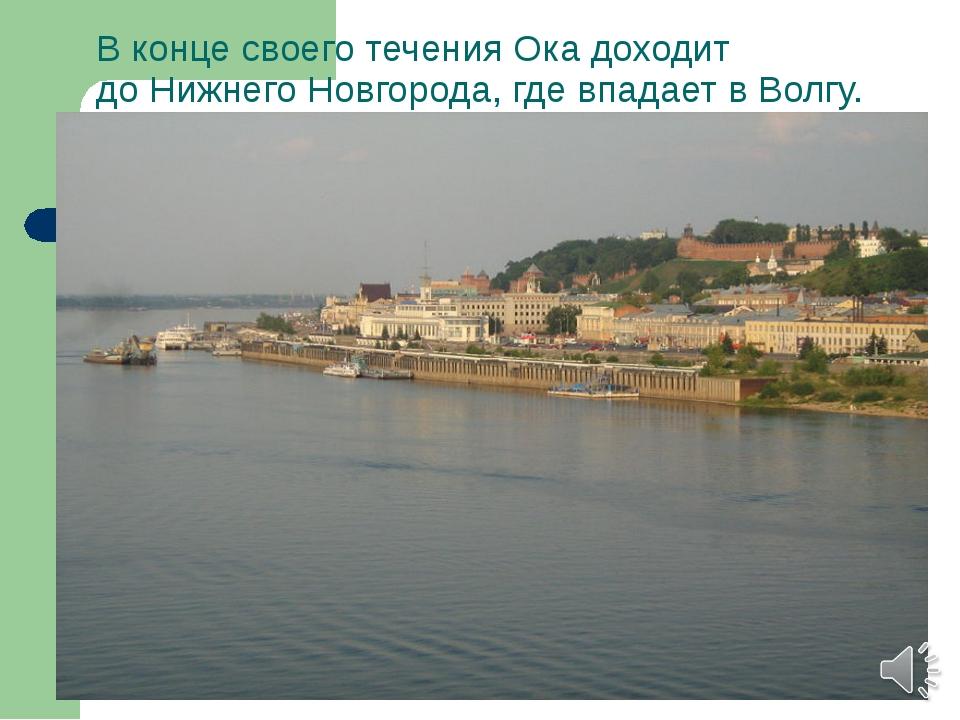 В конце своего течения Ока доходит доНижнего Новгорода, где впадает в Волгу.