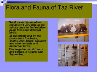 Flora and Fauna of Taz River.   The flora and fauna of our region isn't very