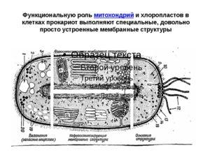Функциональную рольмитохондрийи хлоропластов в клетках прокариот выполняют