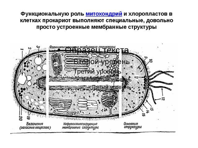 Функциональную рольмитохондрийи хлоропластов в клетках прокариот выполняют...