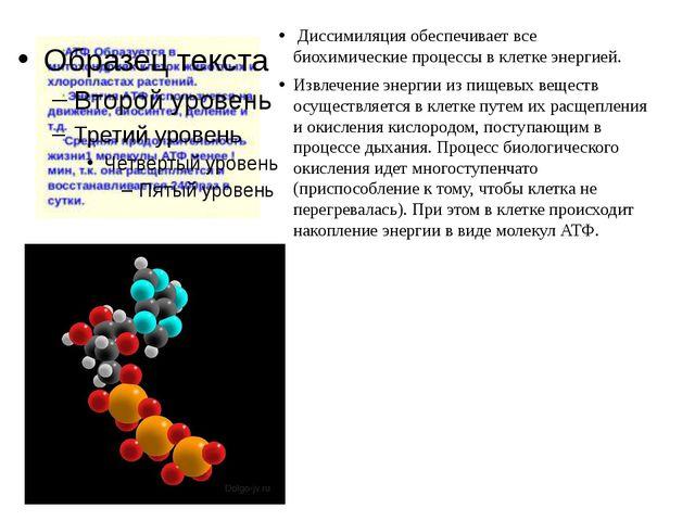 Диссимиляция обеспечивает все биохимические процессы в клетке энергией. Извл...