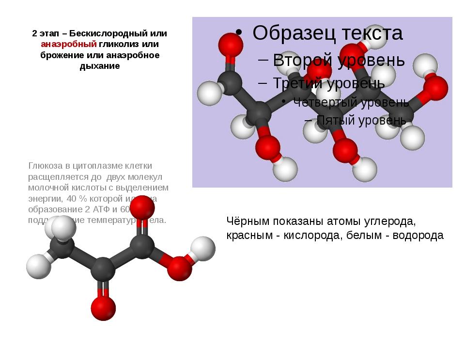 2 этап – Бескислородный или анаэробный гликолиз или брожение или анаэробное д...
