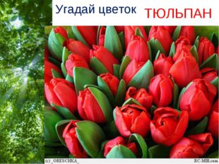 Угадай цветок ТЮЛЬПАН Free Powerpoint Templates Page *