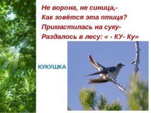 КУКУШКА Не ворона, не синица,- Как зовётся эта птица? Примастилась на суку- Р