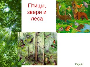 Птицы, звери и леса Free Powerpoint Templates Page *