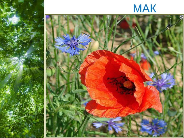 МАК Free Powerpoint Templates Page *