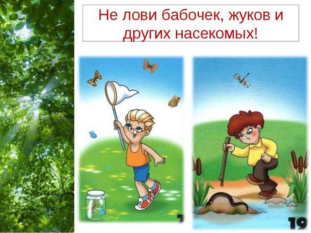 Не лови бабочек, жуков и других насекомых! Free Powerpoint Templates Page *