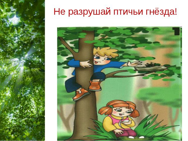 Не разрушай птичьи гнёзда! Free Powerpoint Templates Page *