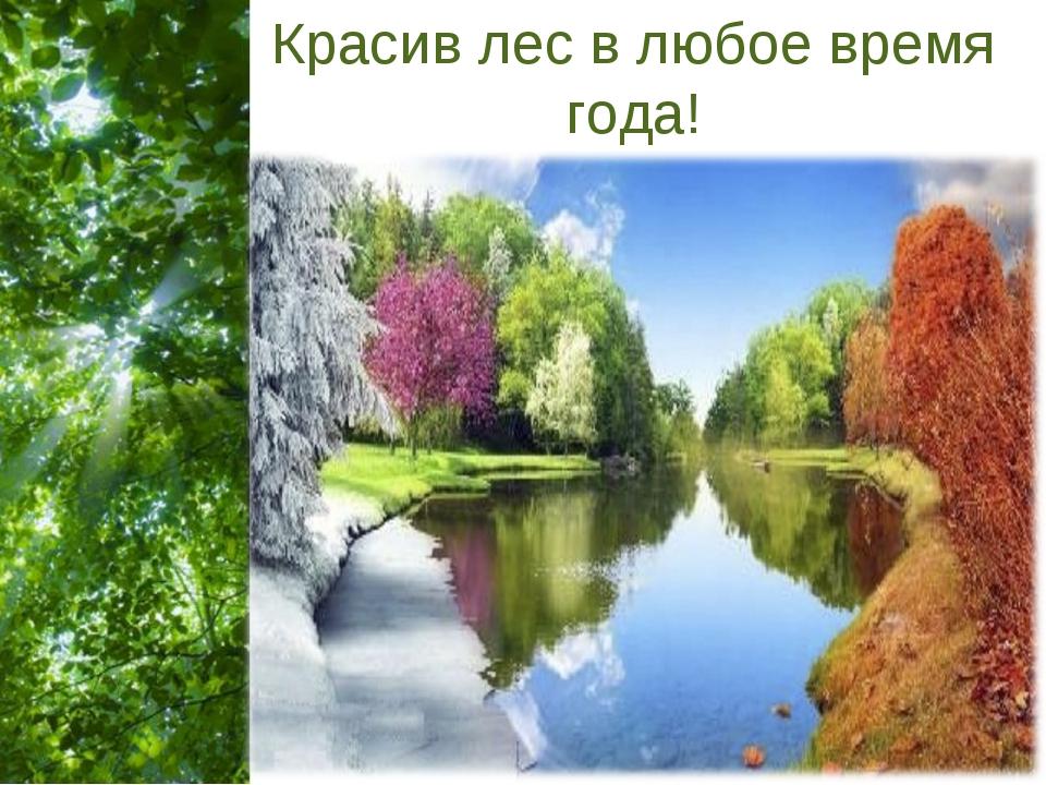 Красив лес в любое время года! Free Powerpoint Templates Page *